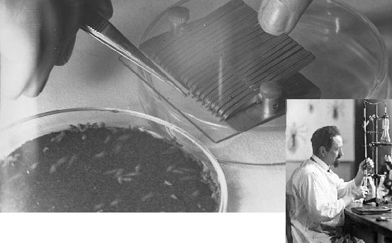 El biólogo que combatió a los nazis con piojos