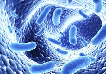Probióticos: los tres mitos que debes conocer