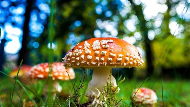 Los hongos alucinógenos pueden reducir la depresión y el miedo a la muerte en pacientes con cáncer