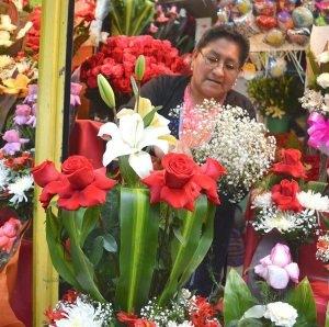 Viveros de la paz cultivan m s de plantas ornamentales for Viveros ornamentales